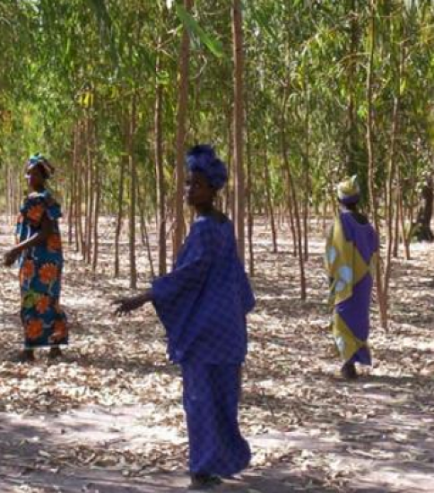 [SENEGAL] Equal-Opportunity-for-All Approach Encourages Local Residents Manage Surrounding Natural Resources Sustainably