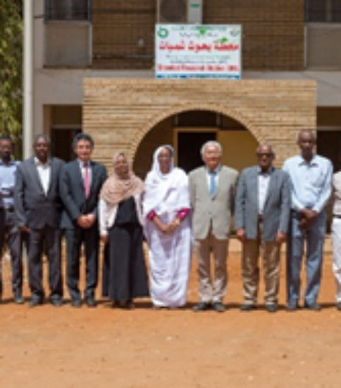 [SUDAN-SATREPS] Development of climate-resilient innovative technologies for sustainable wheat production in the dry and heat-prone agroecologies of Sudan and Sub-Saharan Africa