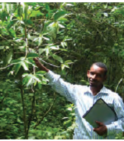 [ETHIOPIA-JICA] Participatory Forest Management Project in Belete-Gera