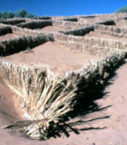[MAURITANIA] Stabilization of Sand Dunes and Biological Fixation in Mauritania